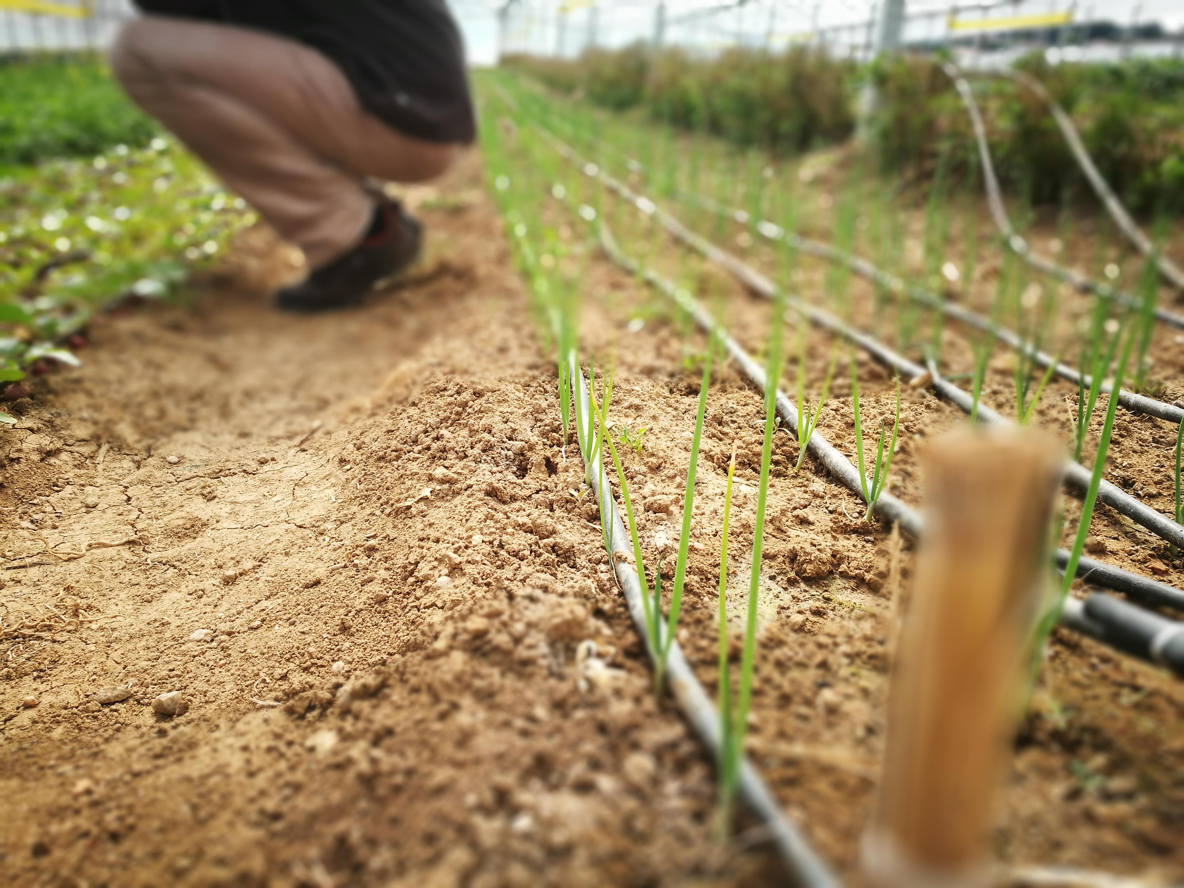 Pequenos Investimentos Na Exploração Agrícola 2º Anúncio – A2S Triplica O Número De Candidaturas Recebidas